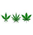 set marijuana leaf in engraving style vector image