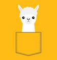 alpaca llama face head in pocket cute cartoon vector image vector image