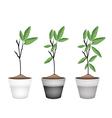Beautiful Ornamental Trees in Ceramic Flower Pots vector image vector image