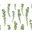 creeper green ivy wall climbing plant hanging vector image vector image