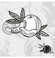 Hand drawn decorative peach fruits vector image vector image