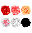 hibiscus tropical flowers various colours natural vector image