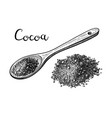 ink sketch of cocoa powder vector image