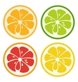 Kinds of citrus fruits vector image vector image