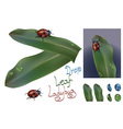ladybug with water drop and leaf vector image