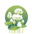 tender elegant white water floral for invitation vector image vector image
