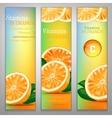Vitamins in Orange vector image vector image