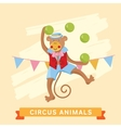 Circus Monkey animal series vector image vector image