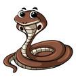 cobra snake on white background vector image