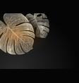 golden monstera leaves on black background vector image vector image
