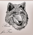 high detailed hand draw wolf realistic style vector image