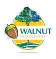 walnut trees hazelnut freshness delicious vector image vector image
