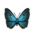 butterfly with blue wings vector image