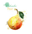 pear watercolor isolated juicy colorful vector image vector image