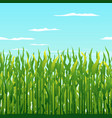 green corn plants background vector image vector image
