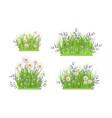 green grass chamomile daisy flowers bush vector image