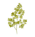 hand drawn colorful maidenhair fern branch vector image vector image