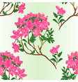 seamless texture pink rhododendron branch vector image vector image