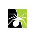 spider animal logo icon design vector image