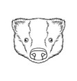 sketch of pigs head portrait of farm animal black vector image