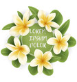 template with plumeria flower wreath vector image