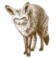 engraving drawing bat-eared fox vector image