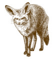 engraving drawing of bat-eared fox vector image vector image