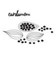 cardamom spice sketch style vector image vector image