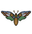 deaths head moth colorful concept vector image vector image