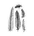 hand draw set of feathers on a white background vector image vector image
