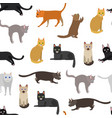 cartoon different types cute cats characters vector image