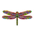 dragonfly ethnic vector image