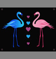 flamingos vector image