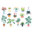 house plants home decor set vector image vector image