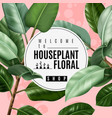 realistic house plant poster vector image vector image