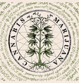 banner for legalize marijuana with cannabis plant vector image vector image