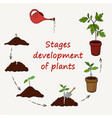 diagram of the stages of growing plants from seed vector image