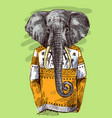 elephant in knitted sweater vector image vector image