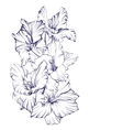 floral blooming gladiolus hand drawn vector image vector image