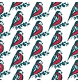 Seamless pattern with hand drawn bullfinch birds vector image vector image