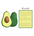 avocado alligator pear exotic juicy fruit vector image vector image