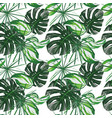 green tropical leaves seamless white background vector image vector image