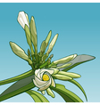 blossoming frangipani flower against the sky vector image vector image