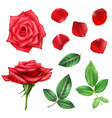 Rose Flower And Petals Set vector image