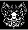 witch skull a dead bat decorated with stars vector image