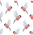 Watercolor bullfinch bird pattern vector image