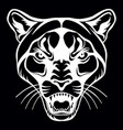 head mascot cougar isolated on black vector image