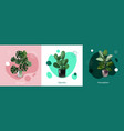 realistic houseplant design concept vector image vector image