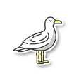 seagull patch vector image