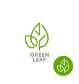 leaf logo concept green leaf line on white vector image